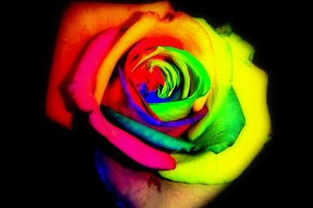 A rainbow rose stands out neon-bright against a black background.